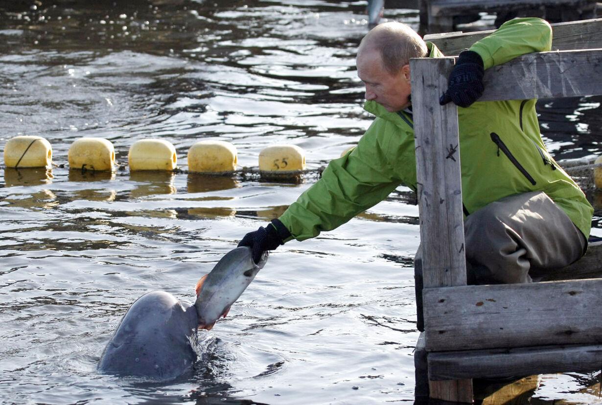 Russia's Prime Minister Vladimir Putin feeds a Beluga whale name 2009