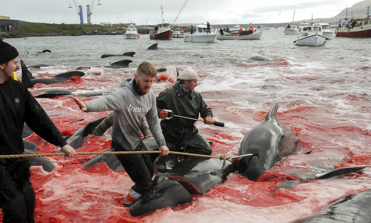 jeve DENMARK-FISLANDS-FISHING-WHALE-TRADITIONS