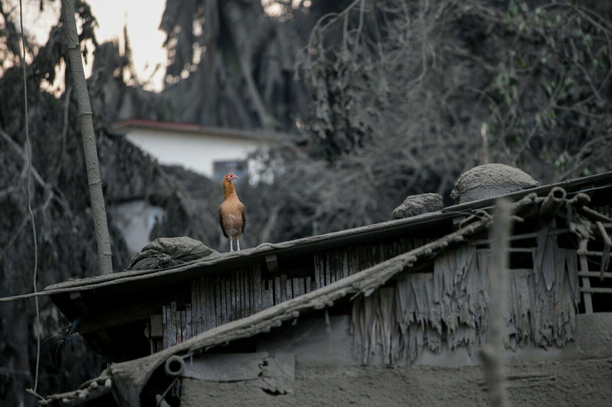 A bird sits atop a roof covere