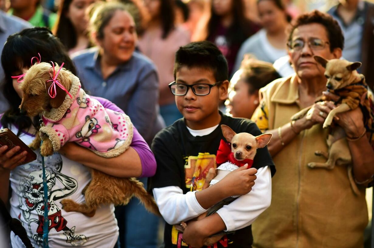 MEXICO-CHURCH-BLESSING-ANIMALS