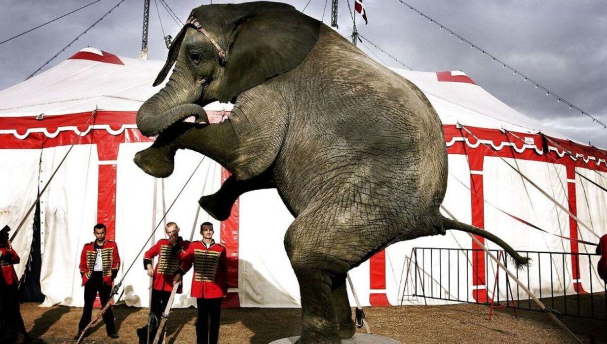 Onsdag - Cirkus Dannebrog