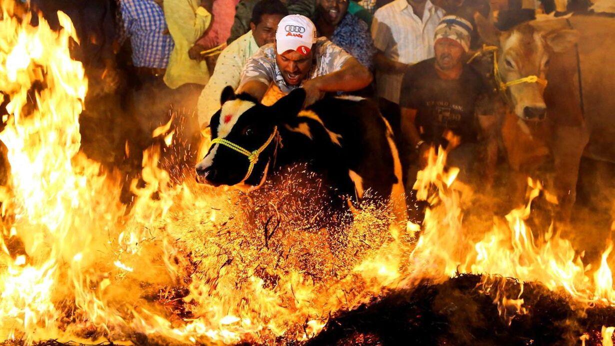 epaselect INDIA PONGAL FESTIVAL