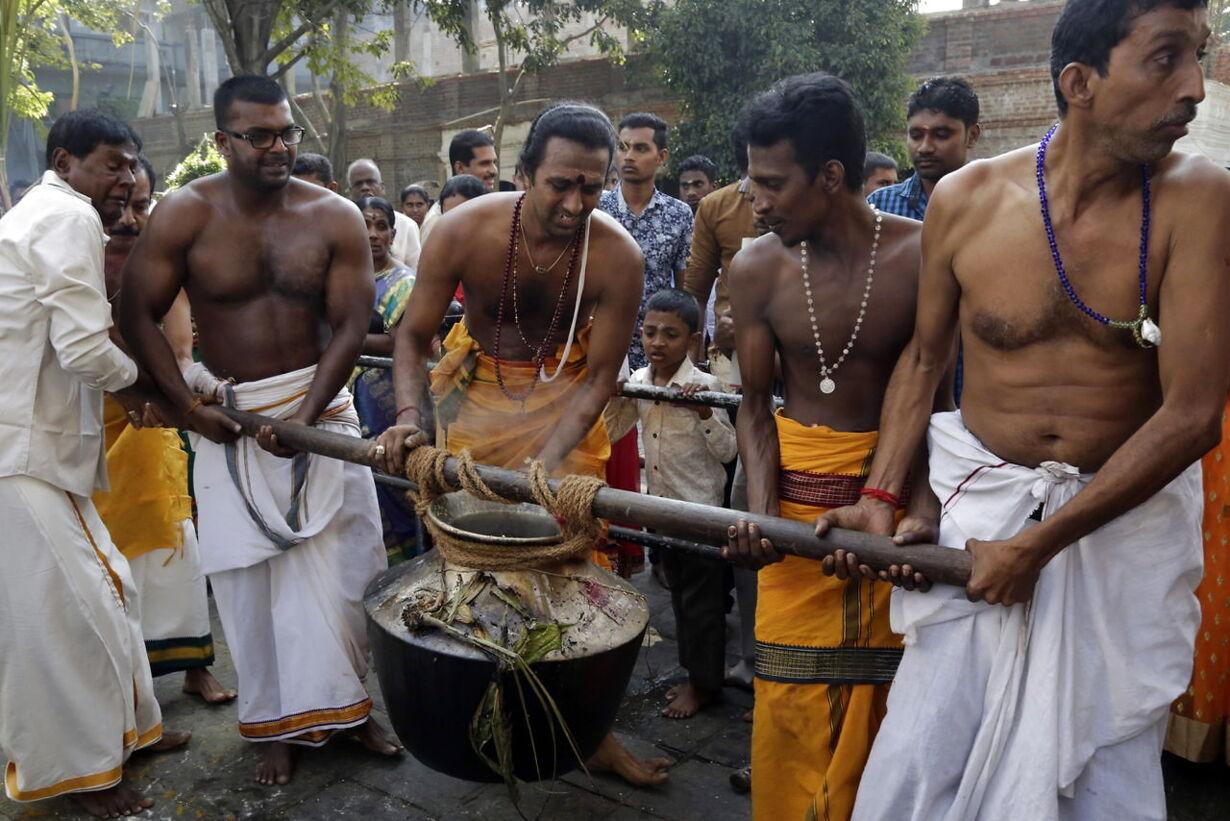 SRI LANKA HINDU FESTIVAL THAI PONGAL