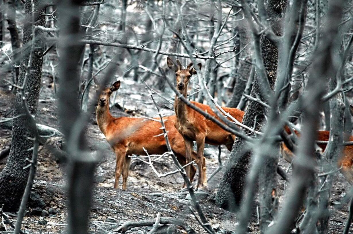 Skovbrande hærger Grækenland - 14