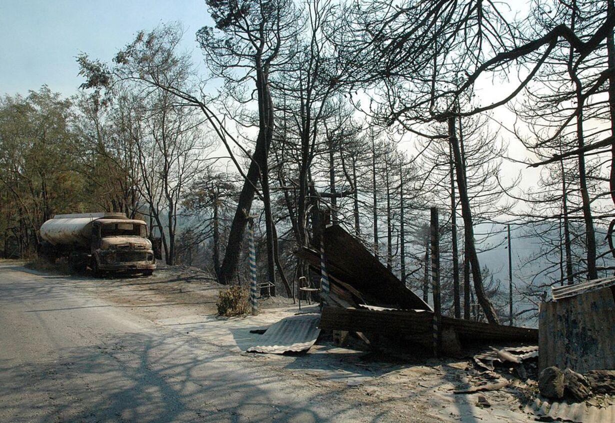 Skovbrande hærger Grækenland - 15