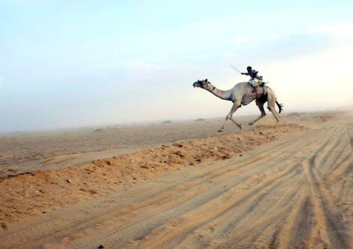 Racerløb på kamelryg - 2