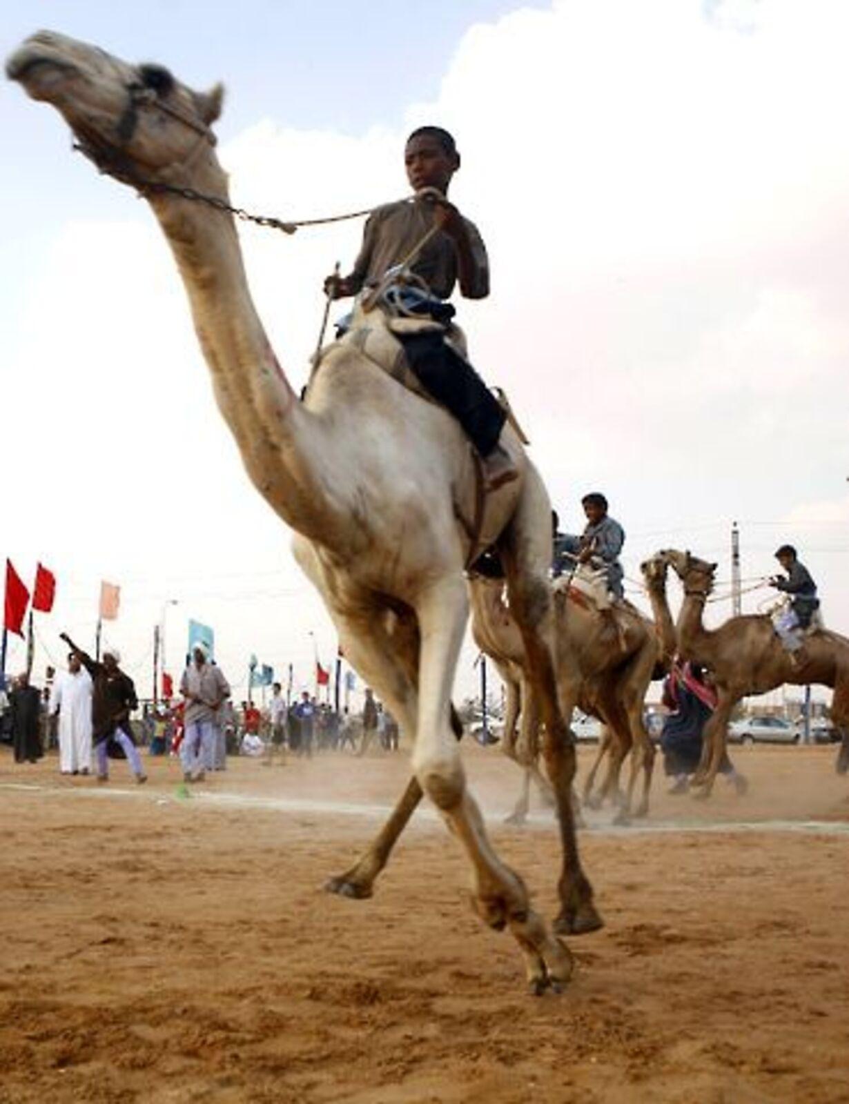 Racerløb på kamelryg - 4