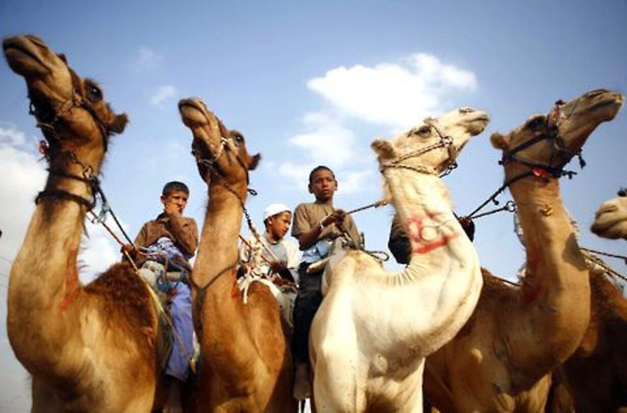 Racerløb på kamelryg - 5