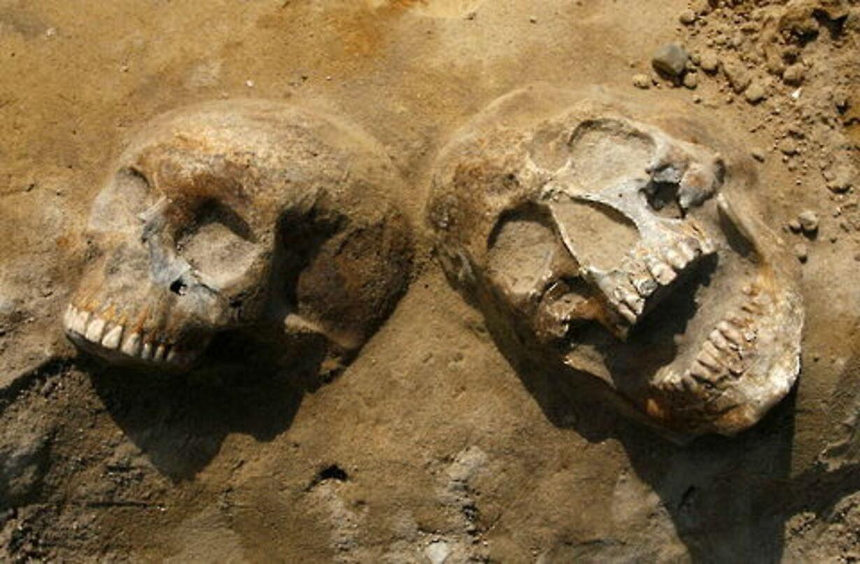 Fund af massegrav fra 30-årskrigen - 3