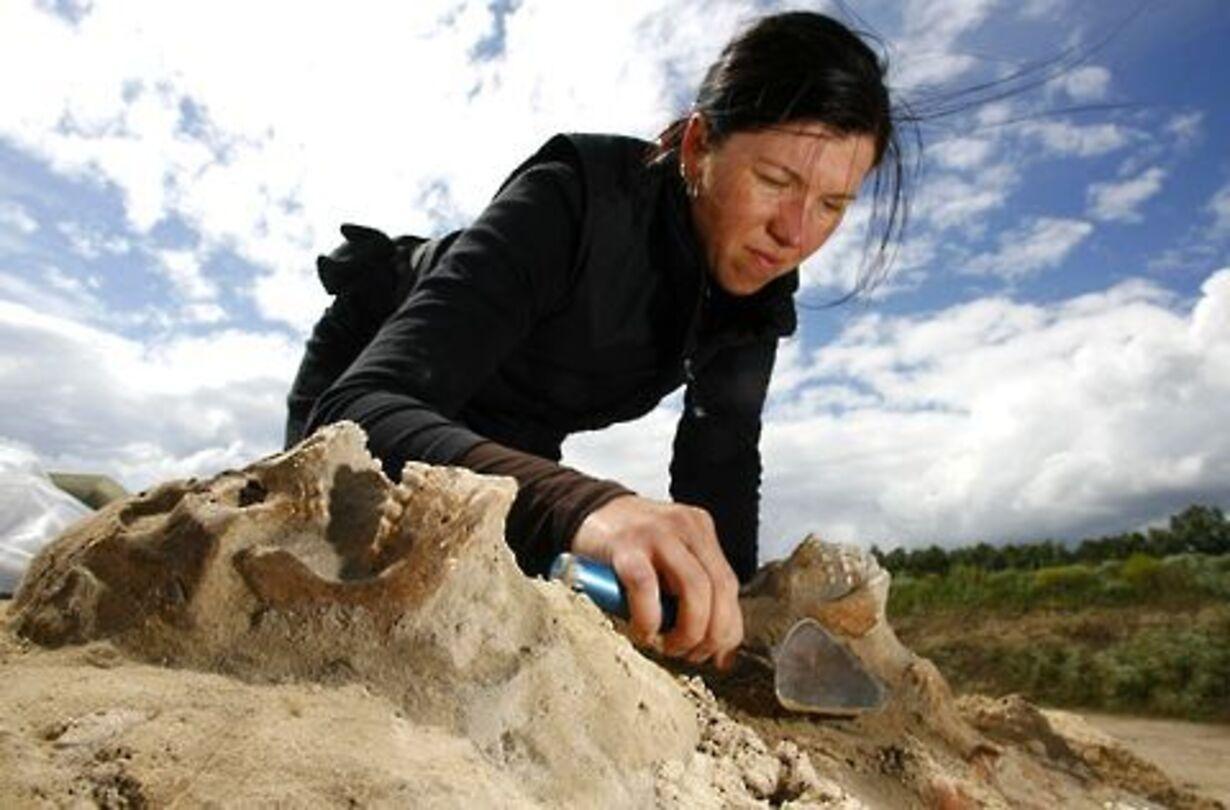 Fund af massegrav fra 30-årskrigen - 5