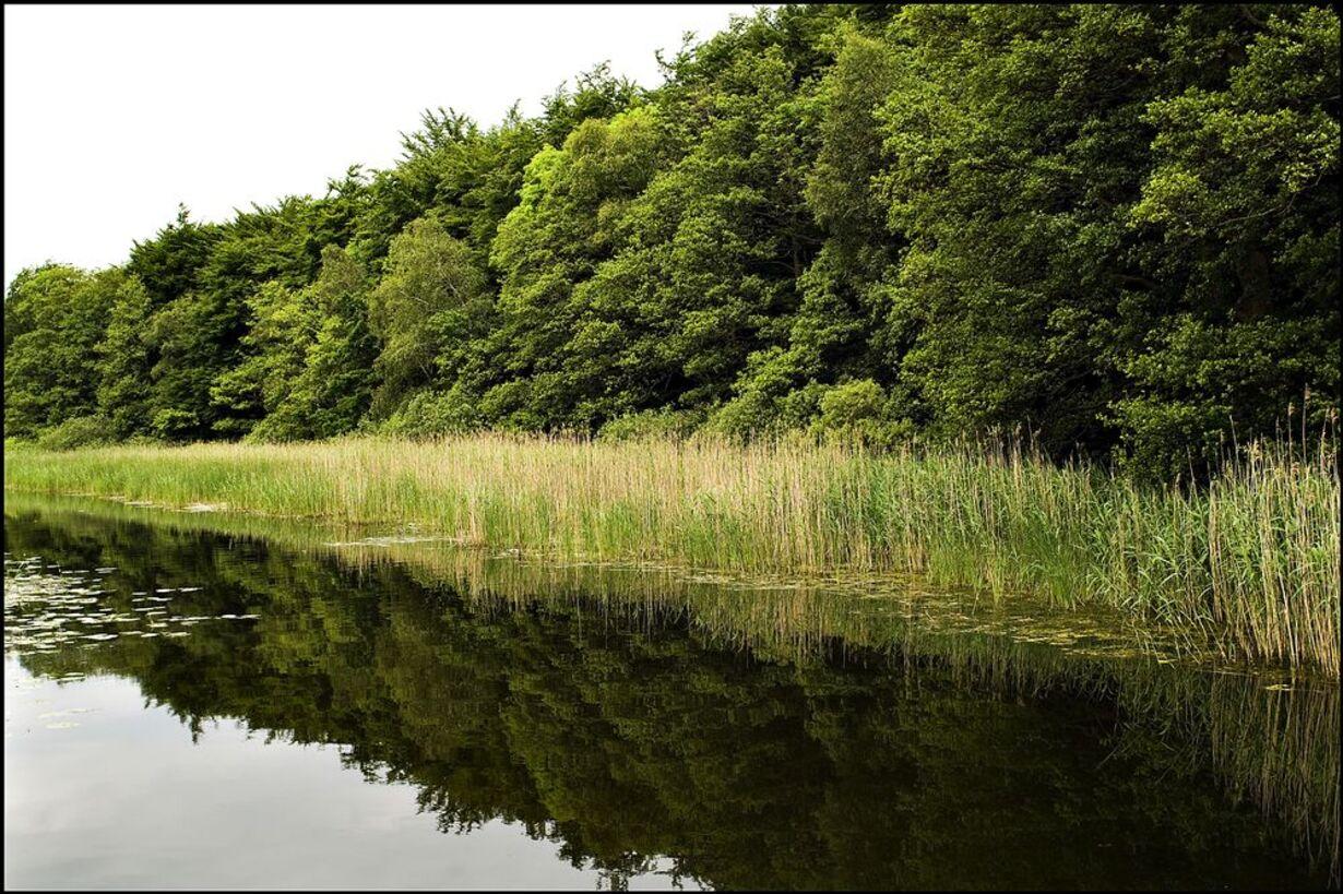 Skovene omkring Gurre Sø - 10