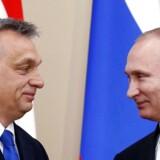 Ruslands præsident, Vladimir Putin (th) og Ungarns premierminister, Viktor Orbán (tv), da Orbán i februar 2016 besøgte Putin i Moskva. Torsdag kommer Putin så på besøg hos Orbán i Budapest. AFP PHOTO / POOL / MAXIM SHIPENKOV