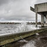 Stormen Ingolf fik vandstanden til at stige flere steder i landet blandt andet i Roskilde Havn og ved Vikingeskibsmuseet i Roskilde, hvor man derfor tog sine forholdsregler for at beskytte museumsudstillingerne (Foto: Mads Claus Rasmussen/Scanpix 2017)