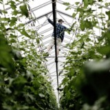 Arkivfoto. Et fynsk gartneri har mistet alle de 11 flygtninge, der var ansat i særlige jobforløb. Det kunne ikke betale sig for dem at arbejde på gartneriet frem for at være på integrationsydelse.