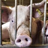 »2017 begyndte virkelig flot for eksporten med høje priser på både mejerivarer og svinekød,« siger cheføkonom Frank Øland, L&F, til Finans.