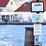 Dagen efter at Danmark blev ramt af stormflod og oversvømmelser, stod vandet stadigvæk højt mange steder. Her er det Stege på Møn. Foto: Bax Lindhardt