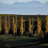 Arkivfoto af landskab nær Toulouse.