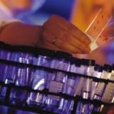 Blandt enkeltaktierne herhjemme kommer der til at være fokus på blandt andet Genmab, da biotekselskabet ved middagstid får nyt fra den amerikanske partner Johnson & Johnson, der aflægger regnskab for andet kvartal.