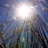 Solen vil til tider kigge frem i løbet af ugen, men den bliver overskygget af regn, byger og blæst. Free/Colourbox
