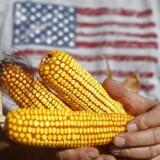Mexico er et af de største eksportmarkeder for amerikanske majs-farmere. Nu vil Mexico flytte deres køb af majs til Sydamerika. REUTERS/Jim Young