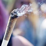 At ryge sig skæv, inden man går på arbejde, er ifølge Columbias forfatningsdomstol i orden – hvis ikke du er eksempelvis pilot, hvor det ville udgøre en sikkerhedsrisiko. Arkivfoto: Marie Hald