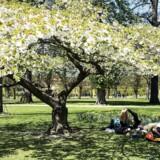 Arkivfoto fra Kongens Have i København.