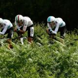 Sky-holdet er blandt de varmeste favoritter i holdtidskørslen. Holdet trænede allerede på Tour de France-ruten i juni. Philippe Lopez/Ritzau Scanpix