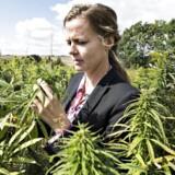 (ARKIV) Sundhedsminister Ellen Trane Nørby på besøg hos Møllerup Gods på Djursland for at se produktionen af hamp på godset.