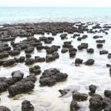 Stromatolites. Foto: Wikipedia