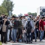 Et stort antal mennesker af ikke-vestlig baggrund har været på kontanthjælp i en årrække. Her flygtningen på motorvej i efteråret 2015.
