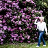 Birthe Kjær udgiver jubilæums-cd'en »50 års pletskud« for at fejre de 50 år, der er gået, siden hun udgav sin første single.