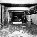 I løbet af to dage kom 29 personergennem den hemmelige »Tunnel 29« under Berlinmuren, inden den styrtede sammen efter endnu en oversvømmelse. Foto: Ulstein Bild