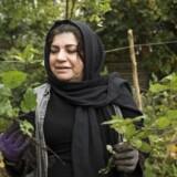 Sarah Hussein kommer i denn lille terapihave på ydre Nørrebro for at nyde naturen og tænke på noget positivt.
