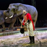 BMINTERN - CIRKUS ARENA, NORDENS STØRSTE CIRKUS. Rudi Althoff med sine tre elefanter.