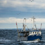 Arkivfoto - kutteren på billedet har ikke noget med sagen at gøre. »Nogle fiskere har tilranet sig store millionbeløb ved svig og stråmandsvirksomhed, godt hjulpet på vej af en meget uduelig forvaltning,« siger Enhedslistens Pelle Dragsted efter rapport fra Rigsrevisionen.
