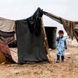 Et stort antal syriske familier er sendt på flugt fra kampene i Deir al-Zor provinsen. (Arkivfoto) Delil Souleiman/Ritzau Scanpix