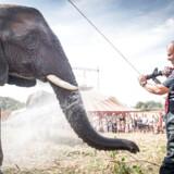 På finansloven er der blevet afsæt syv mio. kr. til at pensionere vilde dyr i danske cirkus. (Arkivfoto: Mads Claus Rasmussen/Ritzau Scanpix)