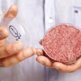 I fremtiden skal vi måske spise burgere med kød, der er dyrket i et laboratorium. Den kunstige burger på billedet er dyrket af professor Mark Post fra Maastricht University i Holland. Foto: David Parry/EPA/Ritzau Scanpix