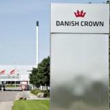 Arkivfoto: Efter et fagligt møde mandag morgen, slagtes der nu atter svin på Danish Crowns slagteri i Egebjerg nord for Horsens.