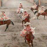 Nogle mexicanske slagtere blander hestekød sammen med oksekød, viser en dna-undersøgelse. Heste bruges dog også til andet end at proppe i munden. Her viser kvindelige mexicanske ryttere deres færdigheder på hesteryg. Scanpix/Oriana Elicabe (arkiv)