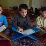 En ny DR Dokumentar afslører svindel med den danske bistand til skoler i Afghanistan. Flere skoler er desuden kontrolleret af Taliban, lyder det. Her ses afghanske drenge, der studerer koranen under ramadanen i byen Herat. / AFP PHOTO / AREF KARIMI