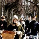 Langs den populære Frederiksberg Allé står over 450 lindetræer.