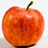 Snup et æble til dit SIM-kort. Men glem alt om iPhones. Apple er arrogant, siger Telmore.