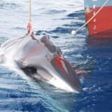 En harpuneret hval i færd med at blive løftet ombord på en japansk hvalfangerbåd i antarktisk farvand. Fra næste sommer vil Japan genoptage kommerciel hvalfangst inden for nationens egne søgrænser.