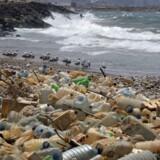 Hvert år udledes der otte mio. ton plasticaffald i verdenshavene. Det anslås at 90 procent af havfugledyr har plastic i maven.