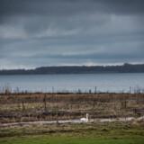 Det har økonomiske konsekvenser for de husejere, der bor langs de danske fjorde, at der bliver udledt kvælstof fra landbruget. Det viser en ny analyse fra Aarhus Universitet, der som det første af sin slags i Danmark har undersøgt de økonomiske konsekvenser ved kvælstofforurening. Et af de steder, hvor de økonomiske konsekvenser for husejerne er størst, er langs Roskilde Fjord.
