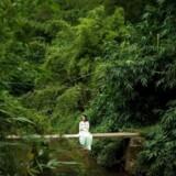 En kvinde hviler sig på en bambusplanke over en flod i en kinesisk skov. Kina har planer om at plante skov svarende til fire gange Storbritanniens areal.