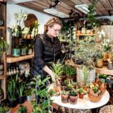 Foruden formandskabet i den lokale handelsstandsforening har Anni Andersen den lokale blomsterforretning.