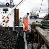 Muslingebåden Frigg ejes af virksomheden Wittrup Seafood, som i flere år har forsøgt at få lov til at fiske efter muslinger i Storebælt, men har fået nej.