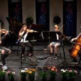 Der er mulighed for at møde over 100 talentfulde unge musikere ved Berlingskes Klassiske Musikkonkurrence - her er det strygekvartetten Træklang, der spiller ved finalekoncerten i Tivolis Koncertsal i 2017.